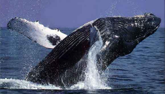 Avistamiento de ballenas Playas en el mundo