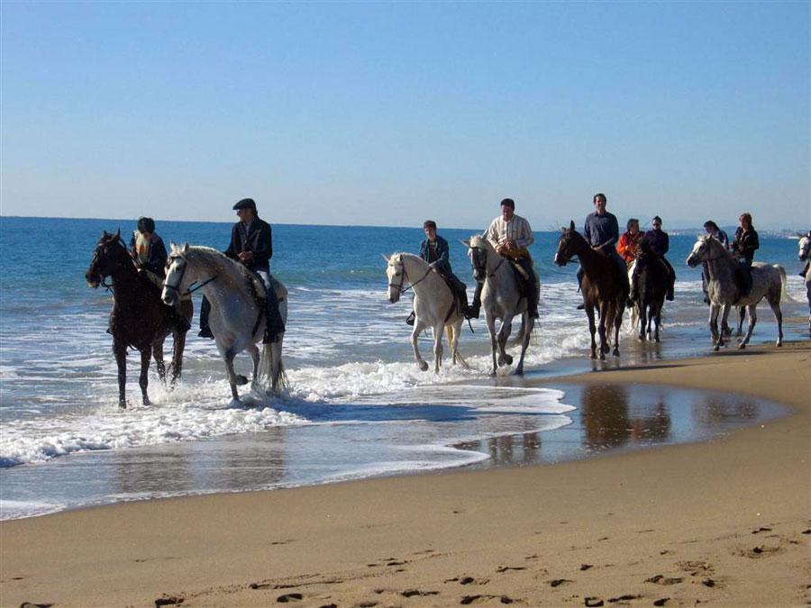 Turismo rural, internet y redes sociales Playas en el mundo