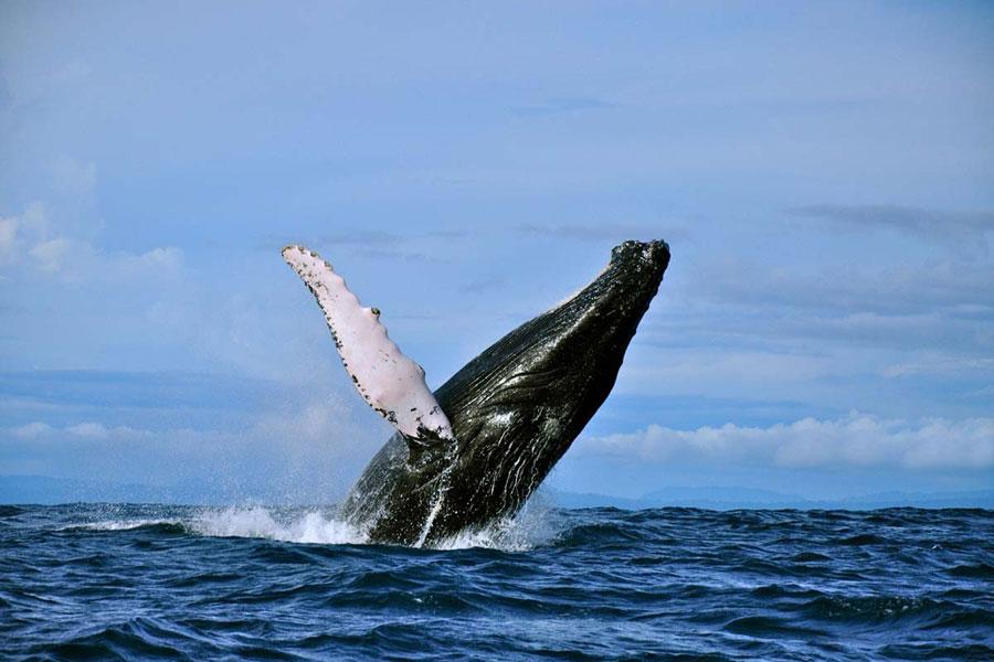 D�nde ver ballenas y delfines??? �en libertad! Playas del mundo