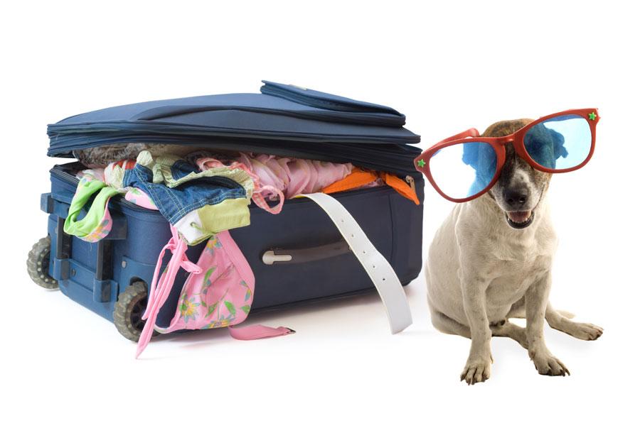 Infograf�a: turismo dog friendly en Espa�a Playas del mundo