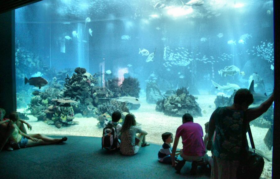 El mejor acuario del mundo está en Lisboa: el Oceanário